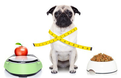 Fotolia_69770718 - healthy dog © javier brosch